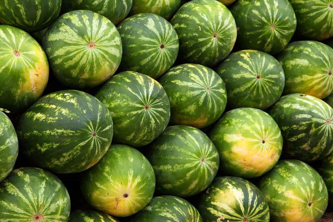 Vattenmeloner